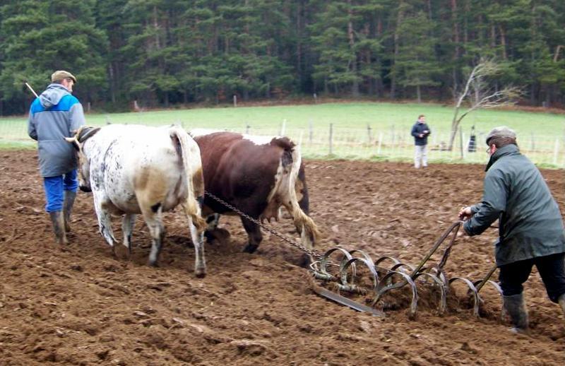 Attelages bovins d 39 aujourd 39 hui archive par cat gorie - Labourer la terre ...