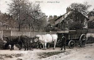 Les bœufs de Nassandres, par Etienne Petitclerc dans Archives anciennes, photothèque nassandre-1ok-300x194