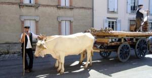 vaches lourdaises francis bazerque 2014 1 ok