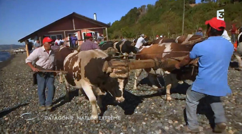 """Résultat de recherche d'images pour """"thalassa patagonie"""""""