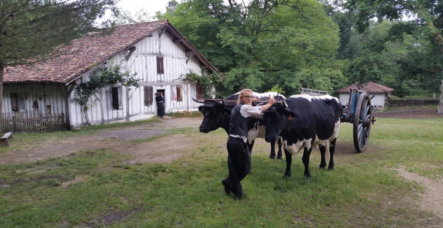 7.  07.2017  B.Fiszpan Paysage ambiance Marquèze bouvier c ok
