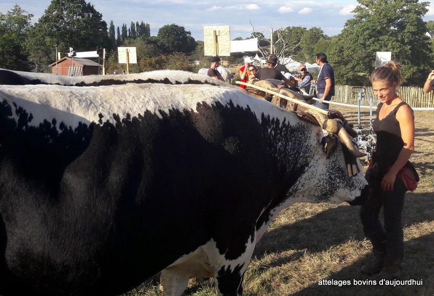 fête  2018 de la vache Nantaise (10)