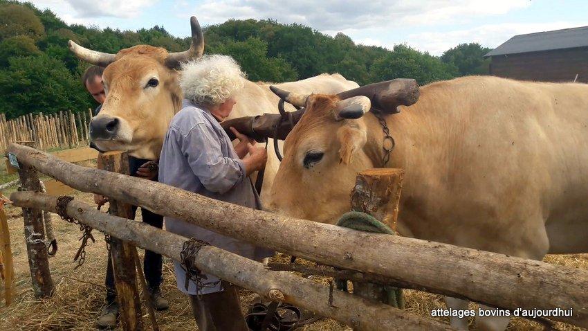 fête  2018 de la vache Nantaise (104)
