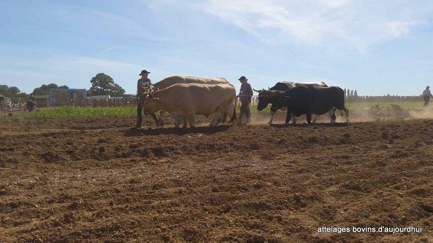 fête  2018 de la vache Nantaise (110)