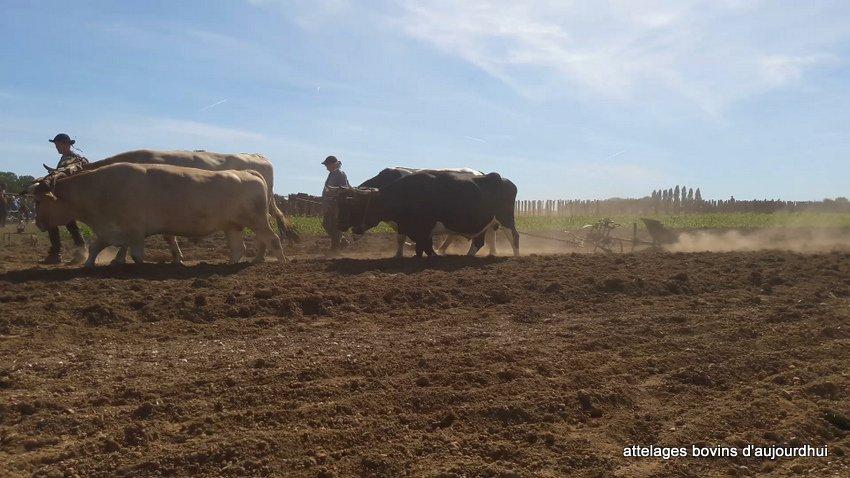 fête  2018 de la vache Nantaise (111)