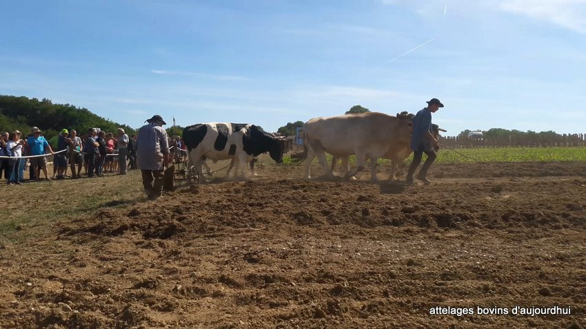 fête  2018 de la vache Nantaise (112)