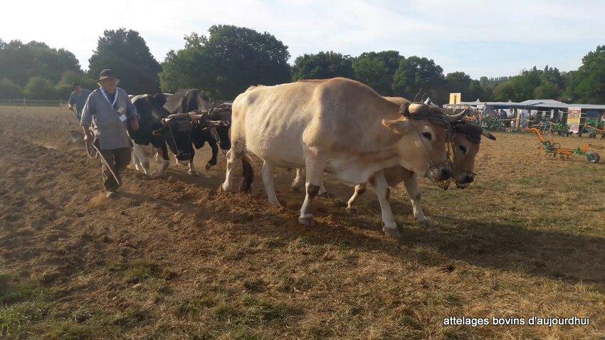 fête  2018 de la vache Nantaise (114)