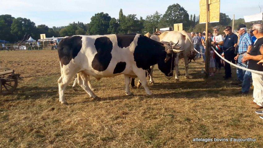 fête  2018 de la vache Nantaise (116)