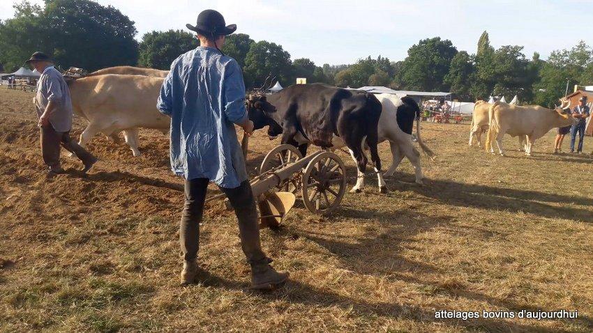 fête  2018 de la vache Nantaise (117)