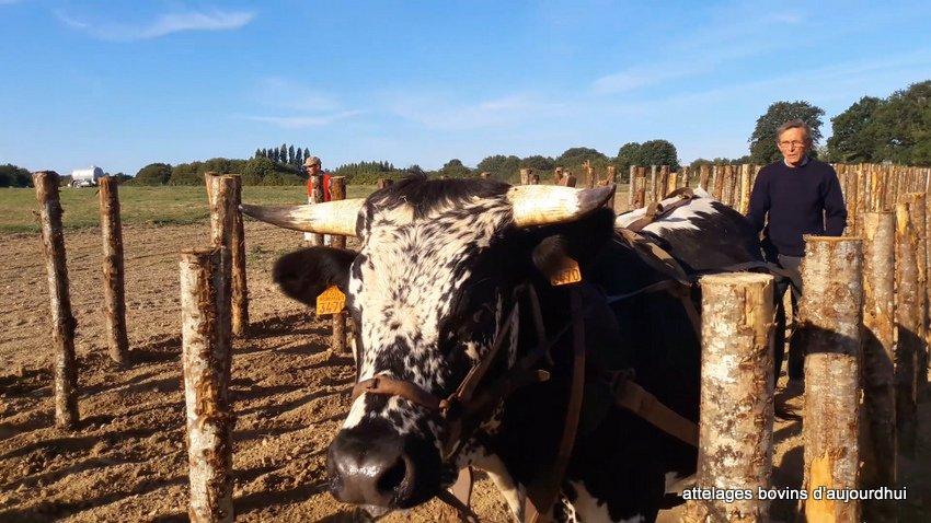 fête  2018 de la vache Nantaise (14)