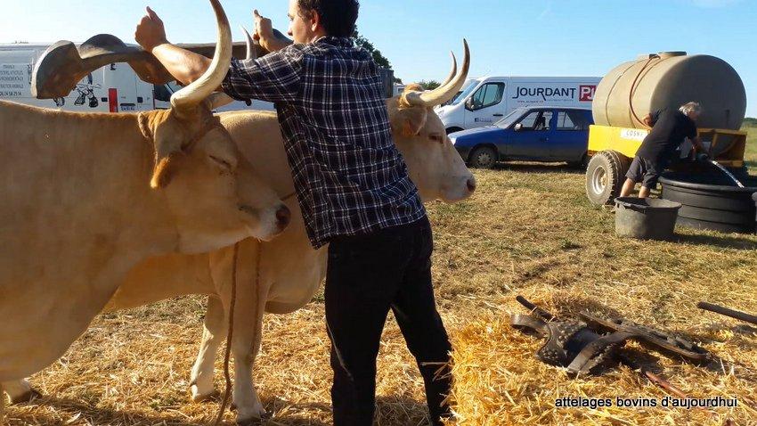 fête  2018 de la vache Nantaise (18)