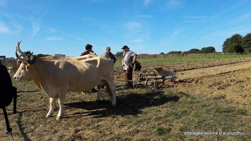 fête  2018 de la vache Nantaise (24)