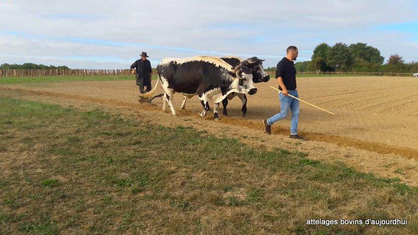 fête  2018 de la vache Nantaise (3)
