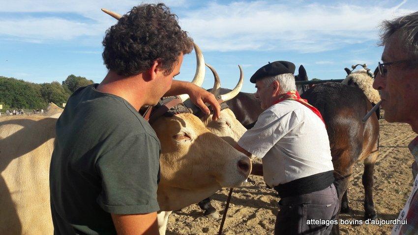 fête  2018 de la vache Nantaise (44)