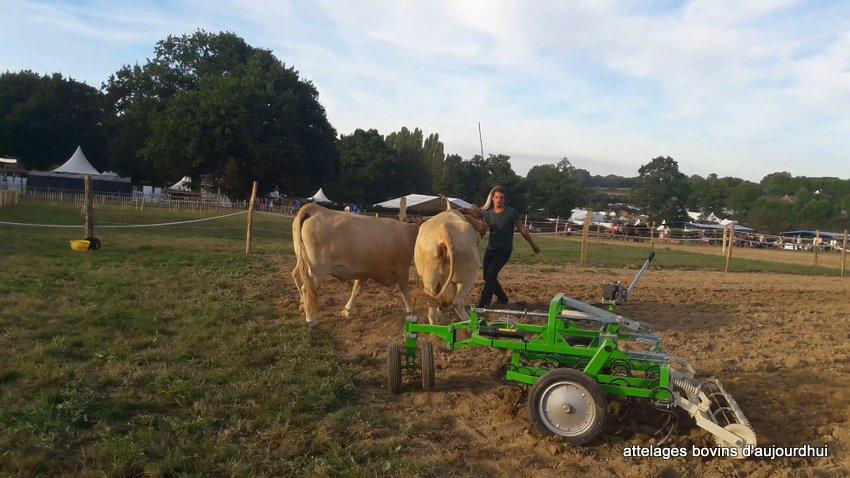 fête  2018 de la vache Nantaise (51)