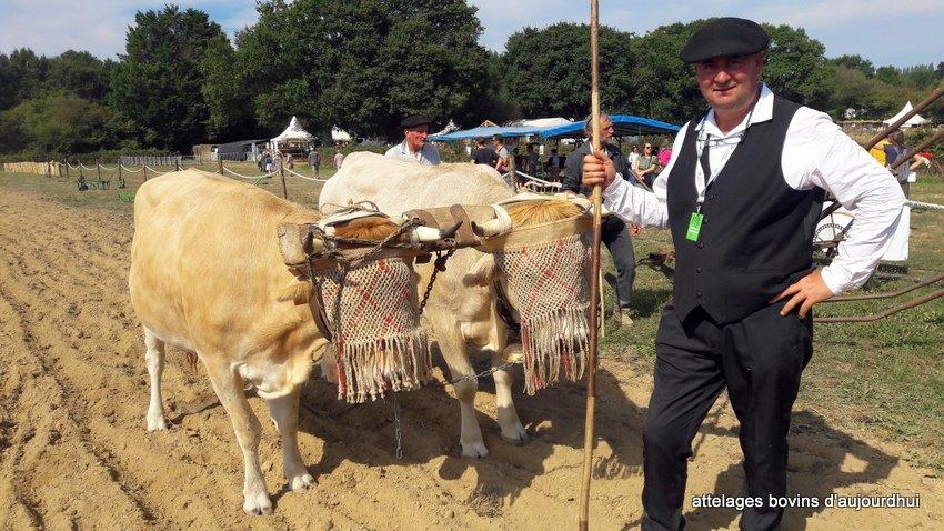 fête  2018 de la vache Nantaise (60)