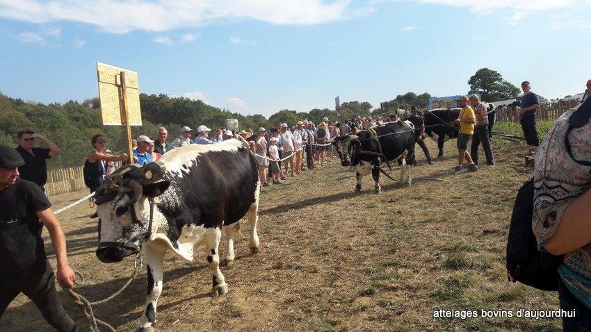 fête  2018 de la vache Nantaise (68)