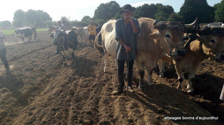fête  2018 de la vache Nantaise (73)