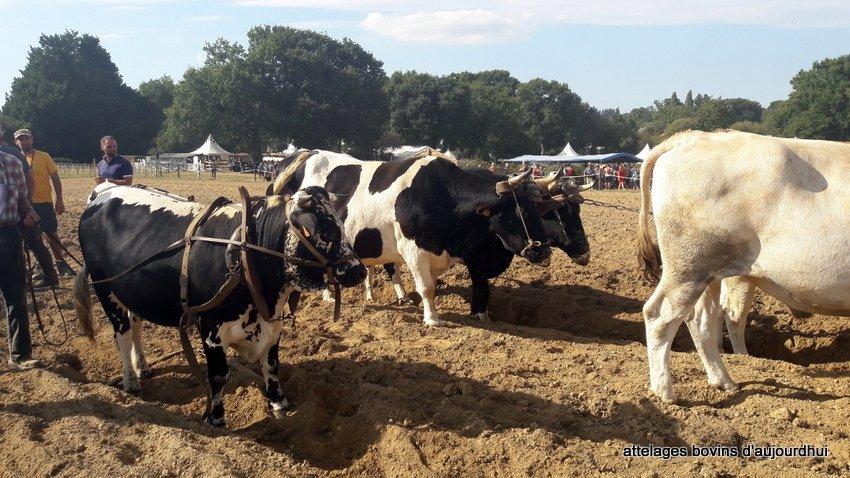 fête  2018 de la vache Nantaise (75)