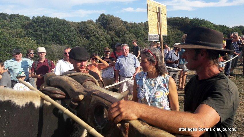 fête  2018 de la vache Nantaise (80)