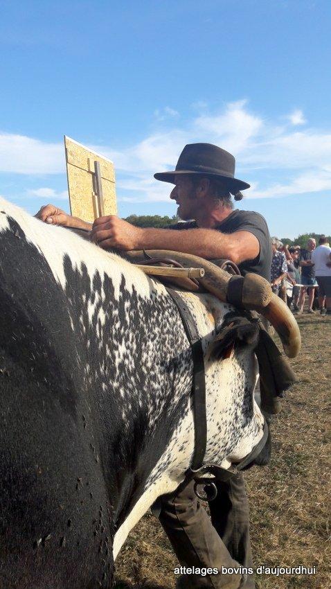 fête  2018 de la vache Nantaise (82)