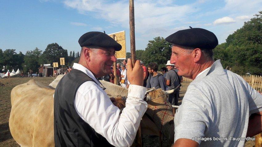fête  2018 de la vache Nantaise (83)