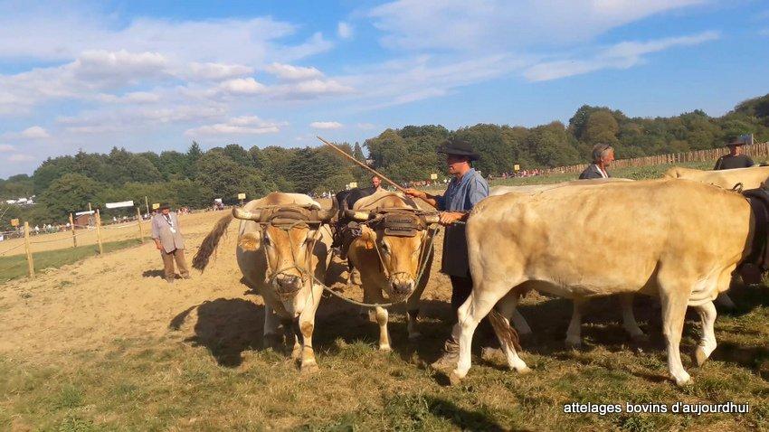 fête  2018 de la vache Nantaise (85)