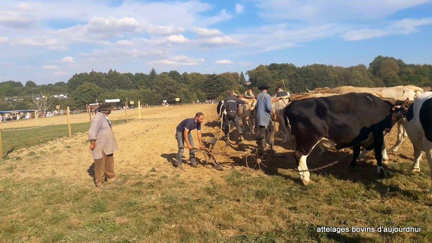fête  2018 de la vache Nantaise (87)