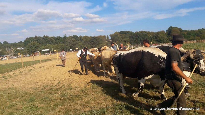 fête  2018 de la vache Nantaise (88)
