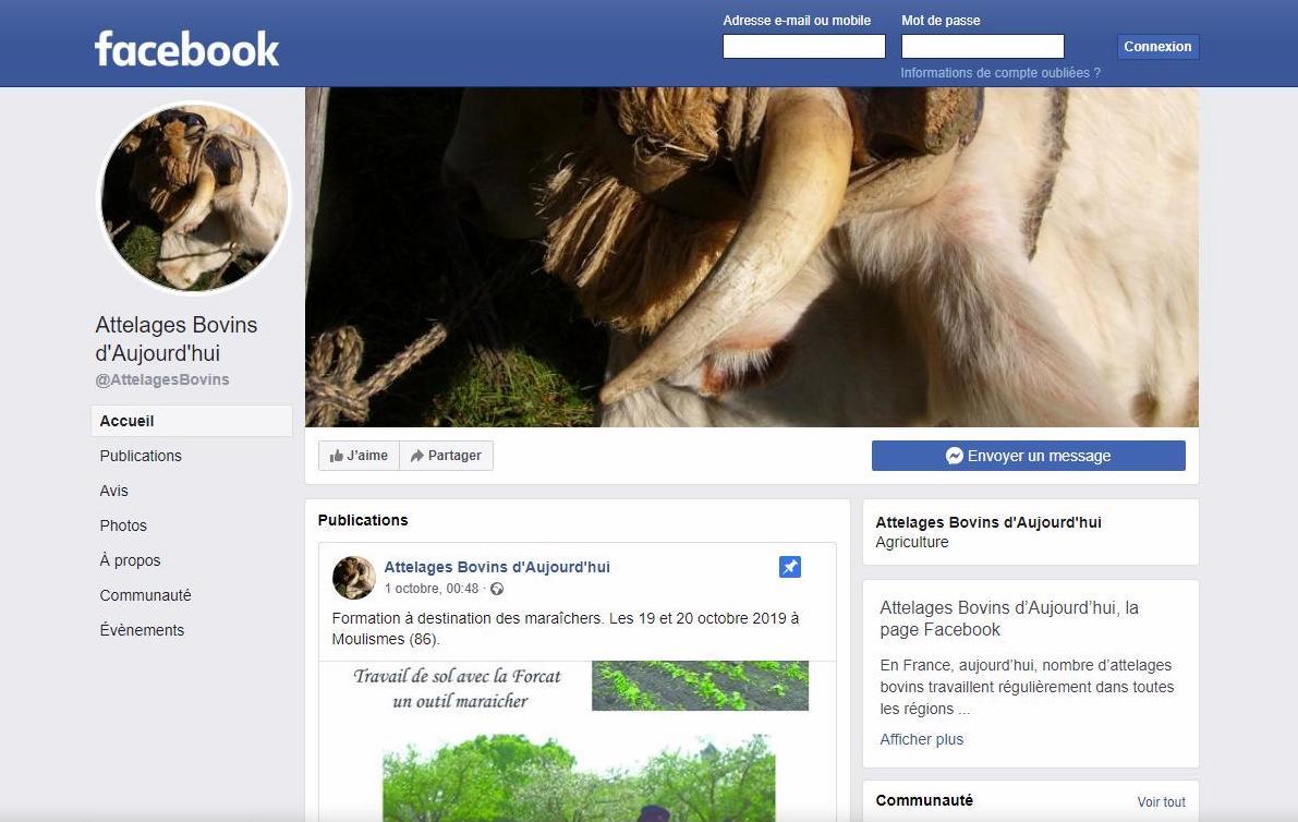 page facebook ABA