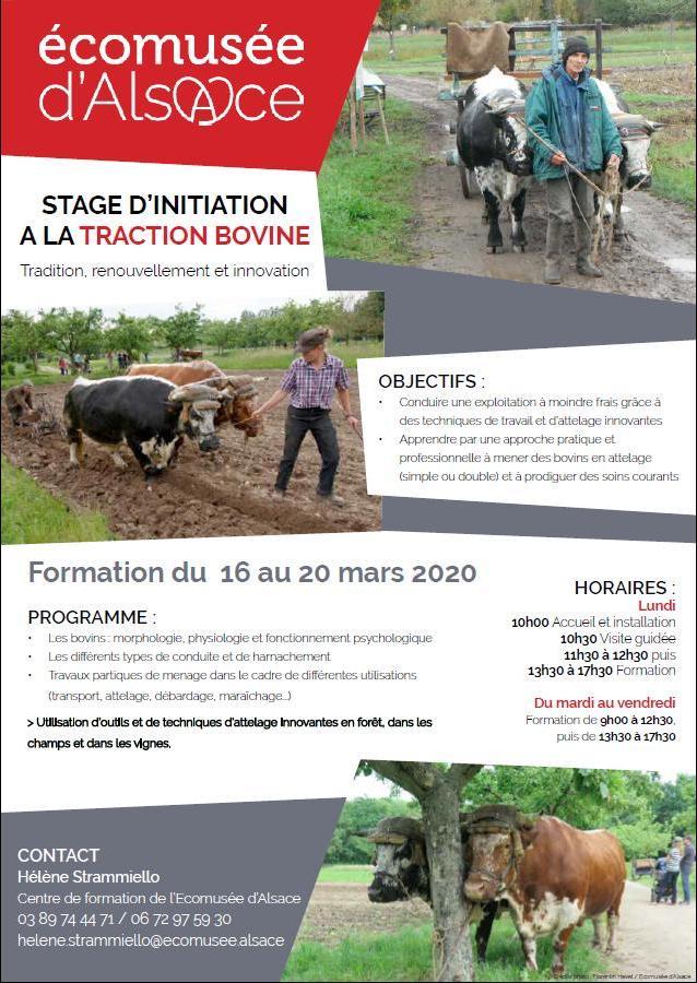 formation TB EMA mars 2020 1
